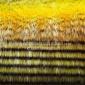 长毛绒厂家专业生产工艺品用横条孔雀毛 野鸡毛 玩具尾巴 抱枕靠垫用长毛绒面料  毛绒布 人造毛皮